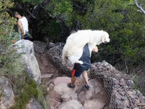 Two hikers carry 40kg Bella down Platteklip Gorge after the 4-year-old golden retriever badly cut her paws.