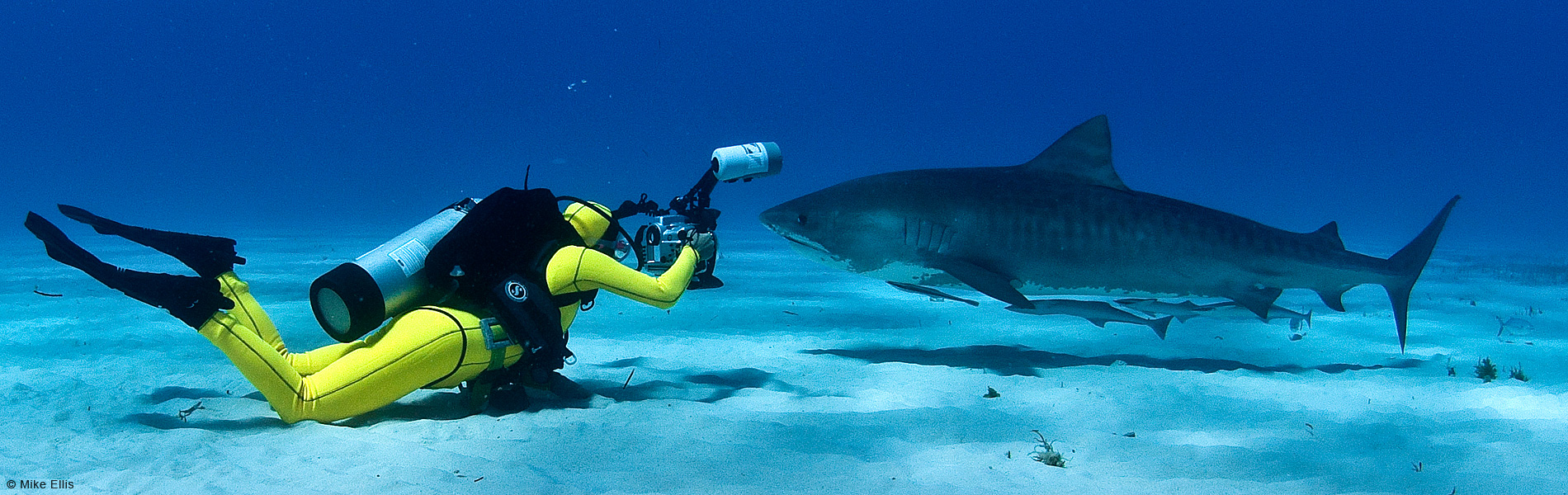 Lesley-Rochat-the-Shark-Conservationist1