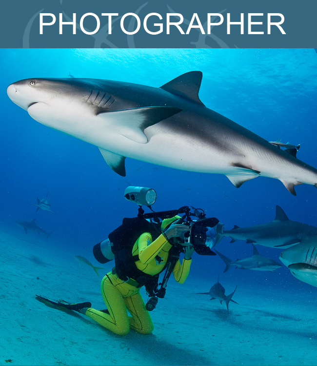 Sharks circle fearless freediver as she poses for photos